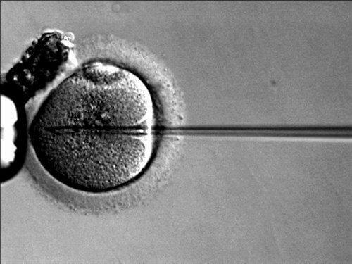 Desarrollo y calidad de los embriones