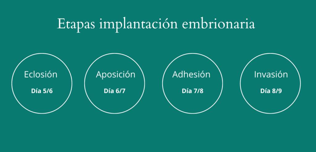 etapas implantación embrionaria