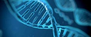 Test fragmentación ADN espermático y la técnica MACS